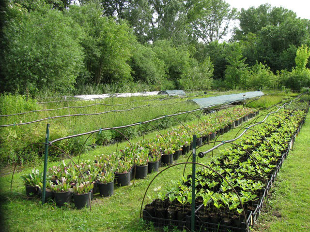 Associazione per i vivai pronatura vivaio for Vivaio alberi